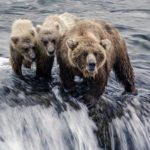 Bears_Nick Hall.1